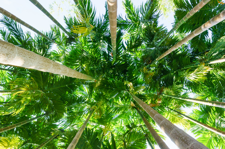 Low angle view of a palm forest,Leaves of low view.