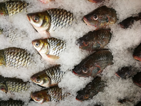 Nile tilapia frozen in the market,Frozen Nile Tilapia Fish in a Pile of Ice at supermarket, Mixed fish for sale on a market Background with fresh fish with ice hake.