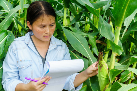 A young girl inspects the corn and notes the observations found.