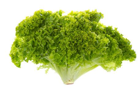 Green Batavia lettuce Banco de Imagens