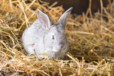 the hutch: Rabbit on Dry Grass