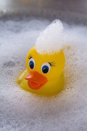 squeaky clean: Yellow rubber duck floating in soap suds