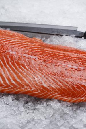 salmon fillet: Salmon fillet on ice