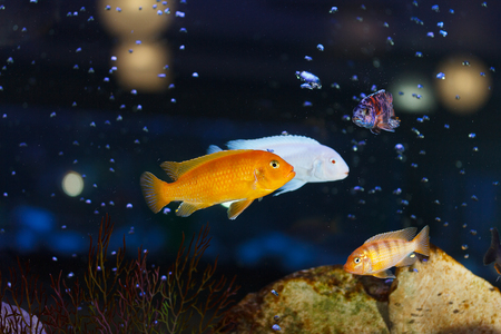 bahama: Little fish in aquarium