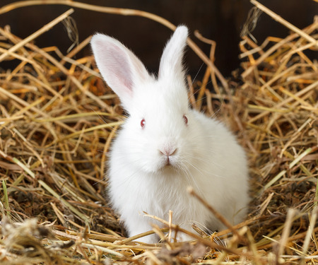 Little white rabbit on dry grass (straw) Stock Photo