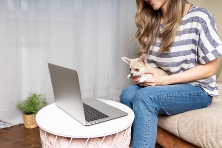 Stay home concept. Cropped woman with puppy dog chihuahua having a video call. Happy and smiling girl working from home office on sofa and drinking coffee and using computer . Selective focus