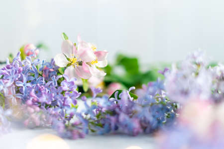 Beautiful pink and lilac flowers on blurred light background with lights. Spring floral background with space for text. Stockfoto