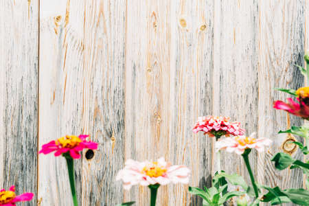 Wooden wall with flowers in the garden Banque d'images