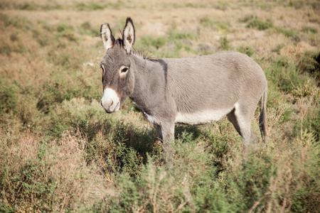 little donkey in the desert Imagens
