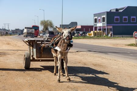 donkey with cart