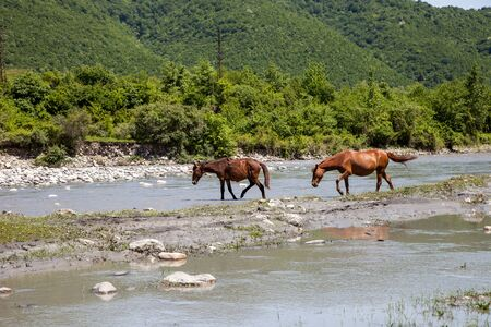 two horses at a watering hole