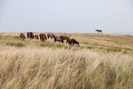 a herd of wild horses grazing in the field
