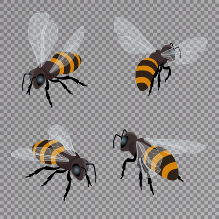 food production: Honey bee vector set on a transparent background. Flat 3d vector isometric illustration. Honey natural healthy food production