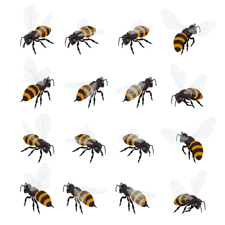food production: Honey bee vector set on white background. Flat 3d vector isometric illustration. Honey natural healthy food production