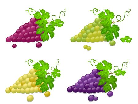 Set of Ripe green and red grapes on a white background.