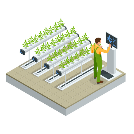 Isometric modern smart industrial greenhouse. Artificial intelligence robots in agricultural. Organic food, agriculture and hydroponic conccept