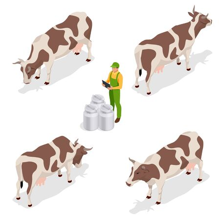Isometric dairy cattle set. Farmer collecting milk at his dairy farm Cows collection. Isolated on white background. Illustration