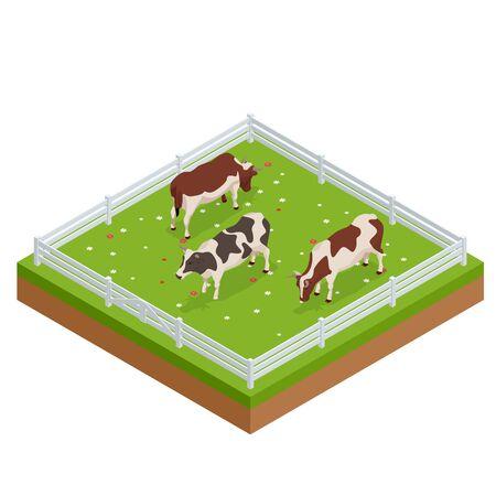 Vacas marrones y blancas isométricas en un campo de hierba en un día soleado y brillante. Conjunto de ganado lechero. Colección de vacas. Ilustración de vector