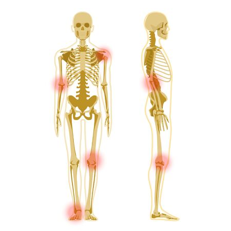 Human skeleton in front and profile isolated on white. Human Skeleton Anatomy X-ray Stock Vector - 141827332