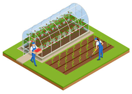 Isometric Greenhouse isolated on white. Growing seedlings in glasshouse. Plants crop in greenhouse Vector Illustratie