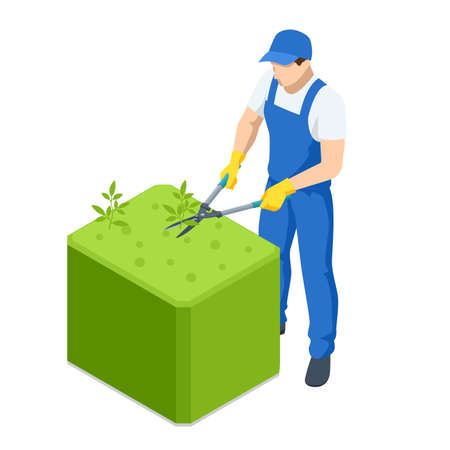 Agricultural work. Isometric gardener work on shrub, remove excess leave. Man hands cuts branches of bushes with hand pruning scissors. Gardener trimming and landscaping green bushes. Vetores