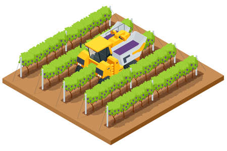 Isometric Mechanical Grape Harvester works by beating the vine with rubber sticks to get the vine to drop its fruit onto a conveyor belt that brings the fruit to a holding bin. Agricultural work