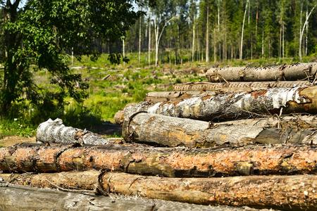 Deforestation, harvesting of raw materials for construction