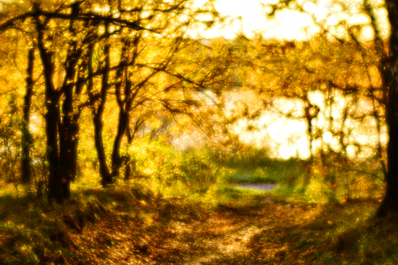 Blurred autumn landscape backlit with trees, fallen yellow leaves and the soft light. Photography soft lens.