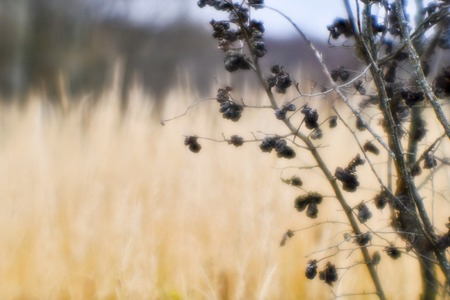 Autumn landscape from the dry stalks of tall grass and tree branches. Shallow depth of field photos were taken on soft lens. Blurry.