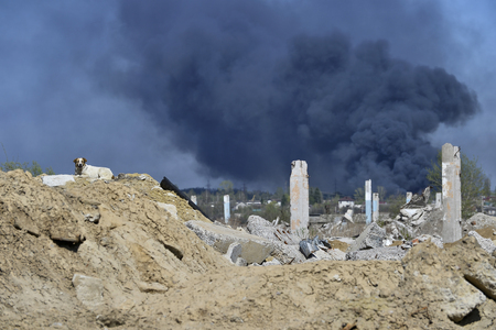 Concrete piles on the background of thick black smoke. In the photo there is a dog. Archivio Fotografico