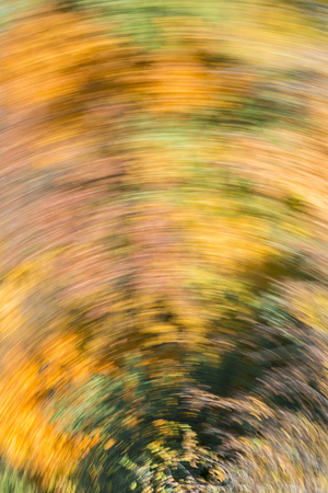 Blurred abstract background of autumn leaves on trees in motion. The concept of rotation in nature in autumn. 版權商用圖片 - 114493126