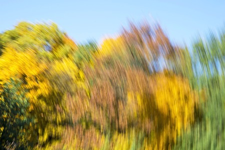 Blurred abstract background of autumn leaves on trees in motion. The concept of rotation in nature in autumn. Reklamní fotografie