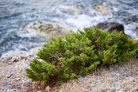 Coast sea. Wild rock beach. The natural rock formation covered with sparse mountain vegetation. Surf in the summer on the rocky coast of the island.
