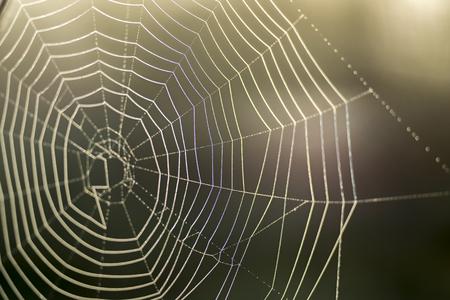 Web in Tautropfen Nahaufnahme mit geringer Schärfentiefe. Das Konzept des Reaktionskommunikationssystems mit dem Objekt. Standard-Bild