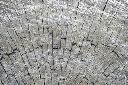 Wooden background of cross-cut old tree trunk cracked by time. Organic texture.