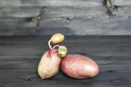 One potato with sprouted shoots together with potatoes of standard configuration on a wooden background. Concept ugly vegetables.