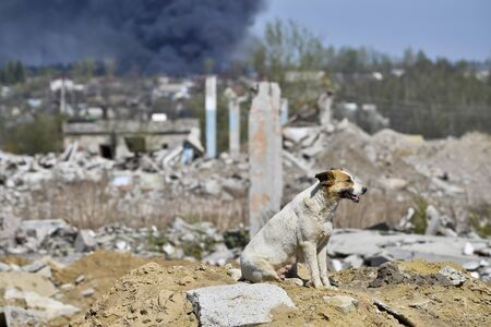 A stray large dog on the outskirts of the city on a hill from the wreckage of the destroyed building. Stock Photo