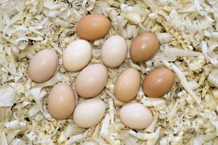 Chicken eggs in a nest of light wood chips. Background. The view from the top. Stock Photo
