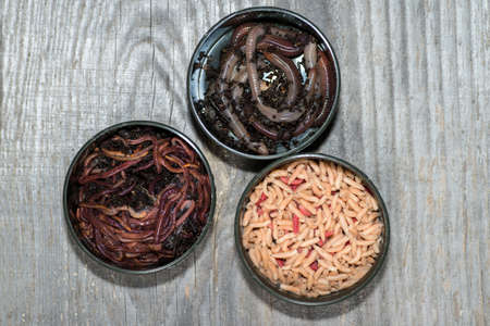 Compost worms, fly larvae and large earthworms in fishing boxes on a wooden grey background.
