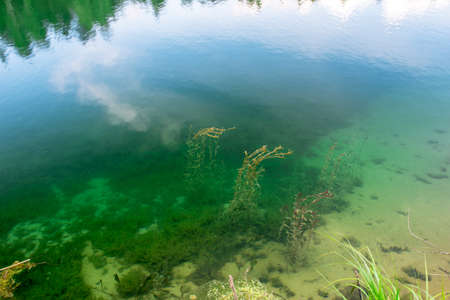 Various types of algae in clear clear water in the coastal area of the lake with a sandy bottom. Background 版權商用圖片