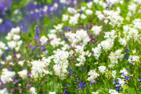 Blur. White and purple wildflowers on a green summer meadow on a Sunny summer day. Natural background