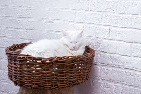 A white cat dozes in a wicker basket against a white decorated wall