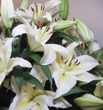 thriving: Bouquet of white lilies