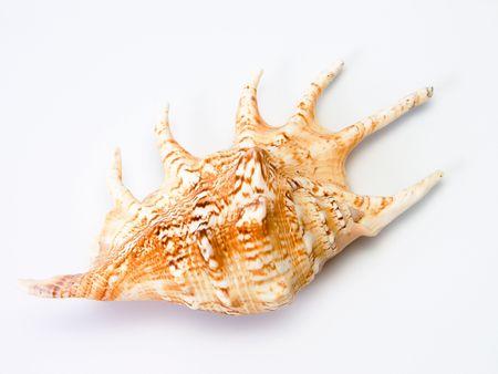 Sea shell #2 Stock Photo - 253725