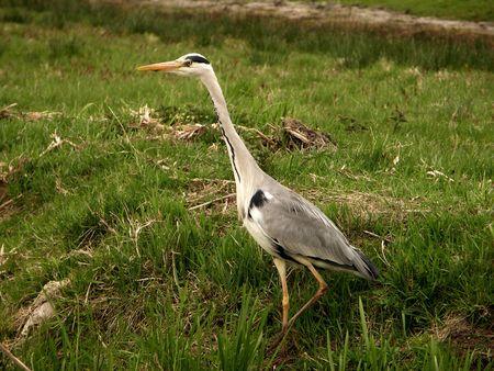 Bird #2 photo