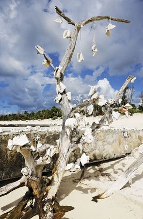 dead tree with shells on the beautiful white sand beach of cozumel island in yucatan mexico  스톡 콘텐츠