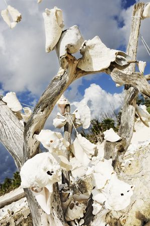 dead tree with shells on the beautiful white sand beach of cozumel island in yucatan mexico  Stock Photo