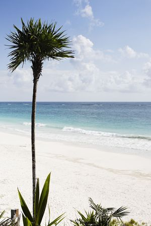 view of the beautiful white sand beach with palm tree  of tulum in yucatan mexico          Stock Photo