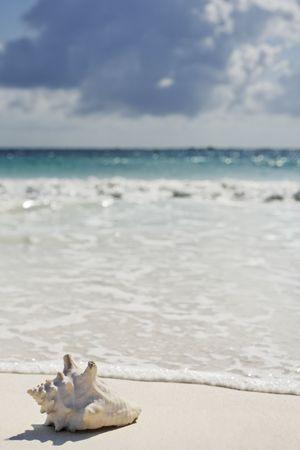 Vista della bellissima spiaggia di sabbia bianca di Tulum nello Yucatan Messico con una conchiglia in primo piano