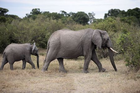 Elephant and its young